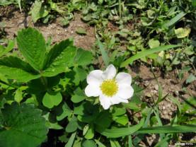 Buletin de avertizare - Tratamente fitosanitare de sezon