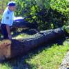 Garda Forestieră Oradea: Pentru micii  proprietari de păduri - Asigurarea gratuită a serviciilor silvice de către ocolul silvic