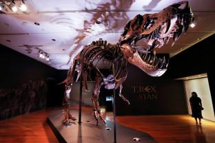 Scheletul unui T-Rex, scos la licitaţie la New York - Fosilă de milioane