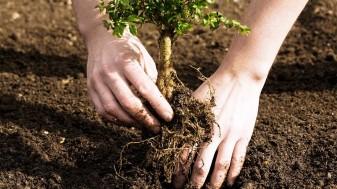 APIA: Crearea de suprafeţe împădurite - Subvenţia pe hectar - termen 11 decembrie