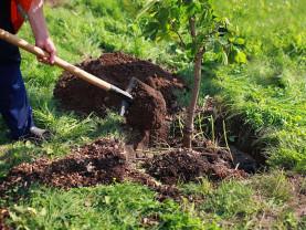 MADR. Prima împădurire - Depunerea cererilor de sprijin - până la finele lunii martie