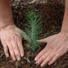 APIA: Termen prelungit la subvenţiile pentru prima împădurire