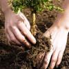 APIA: Sprijin pentru prima împădurire - Termen prelungit până în luna noiembrie