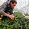 PNDR: Etape pentru instalarea unui tânăr fermier