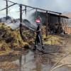 Misiuni ale pompierilor în minivacanţa de Rusalii - Animale salvate, incendii stinse