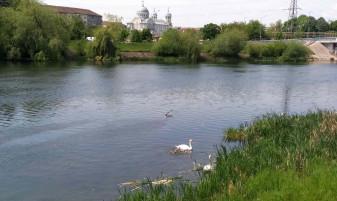 Familie de lebede, în zona Podului Sovata - Atracţia orădenilor