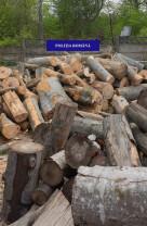 Mai mulți bihoreni au fost prinși transportând material lemnos fără acte legale - Lemne de foc și cherestea confiscate