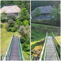 Plângere penală pentru tăierea liliacului transilvănean - Defrişare sălbatecă în Valea Iadei