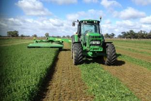 MADR. Şi în 2020 - Ajutor de minimis pentru cultivatorii de usturoi