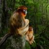 Wildlife Photographer of the Year: Maimuţele au câştigat marele premiu