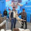 Kilogramul de carne a scăzut până la 10 lei - Miei pe alese în Piaţa Ioşia