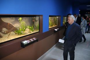 La Muzeul Ţării Crişurilor - Adoptă o vietate