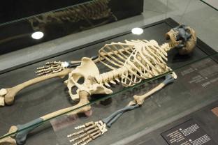 Un mister care preocupă de multă vreme comunitatea ştiinţifică - Dispariţia omului de Neanderthal