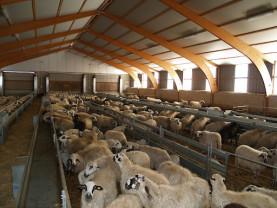 ANSVSA. Noi reguli pentru crescătorii de ovine/caprine
