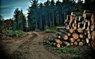 CE a activat procedura de infringement pentru România - Cauza, tăierile ilegale de păduri