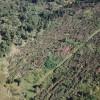 Mii de hectare afectate în urma fenomenelor extreme - Pădurile judeţului, devastate