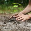 APIA reaminteşte - Prima împădurire, termen prelungit