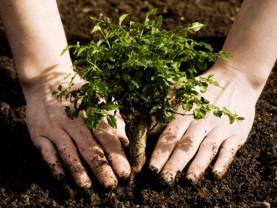 Direcţia Silvică Bihor. Luna plantării arborilor - Program de regenerare de 6,38 ha de împăduriri