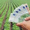 MADR: Sprijinul cuplat plafoanelor alocate în sectorul vegetal