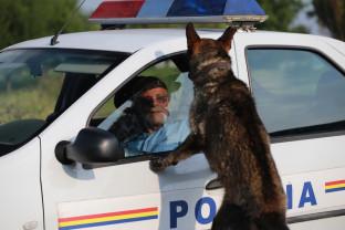 Ministerul de Interne a pus în transparenţă proiectul de lege - Poliţia Animalelor