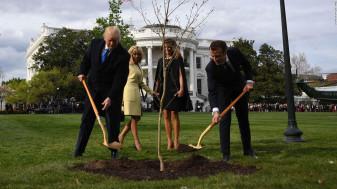 Pomul simbol al prieteniei Trump-Macron s-a uscat