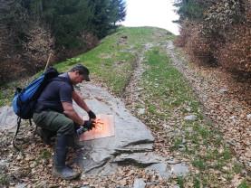 Omulețul portocaliu în Munții Rodnei - Ghid pentru Poiana cu narcise