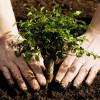 """Fonduri pentru """"prima împădurire"""" - A treia sesiunea de depunere a cererilor"""