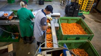 AFIR. Procesarea/marketingul produselor agricole - Sprijin pentru investiții