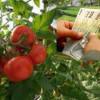 MADR: Programul Tomate - Plăţi către beneficiari