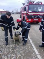 Pompierii beiușeni au salvat un câine căzut într-o fântână