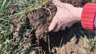 MADR. Plățile către fermieri - Fonduri pentru producătorii cu culturi afectate de secetă