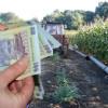 Schemele de sprijin pe care le pot accesa fermierii (I)