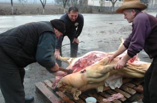 ANSVSA. Sacrificarea porcilor în perioada sărbătorilor - Măsuri de prevenire, supraveghere și control