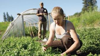 MADR. Instalarea tinerilor fermieri - A demarat depunerea cererilor