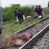 Traficul pe calea ferată a fost întrerupt azi dimineaţa - Vaci lovite de tren