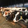 CJAPIA Bihor: Crescătorii de vaci cu lapte - Documente pentru obţinerea sprijinului financiar excepțional