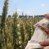 MADR: Fonduri pentru producători agricoli - Cuantumul ajutorului național tranzitoriu ANT1