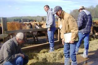 APIA: În fermele de animale - Verificările pentru ANT/SCZ pot fi şi inopinate