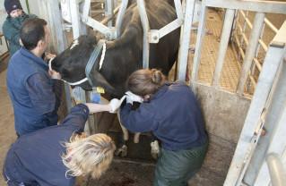 În sprijinul medicilor veterinari - În acest an, va fi pusă în aplicare o nouă legislaţie