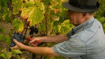 CJAPIA Bihor. Sectorul viniviticol - O nouă formă de sprijin acordată producătorilor