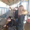 Elevi de la Școala Nicolae Bălcescu - În vizită la Adăpostul Grivei