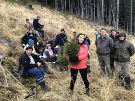15.000 de copaci, plantați în Munții Făgăraș de o artistă din Sălaj emigrată în Marea Britanie