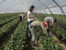ANPIS. Sprijin pentru agricultori şi crescătorii de animale - Domeniile pentru care se acordă