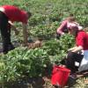 Proiect privind Registrul zilierilor - Persoanele care refuză să lucreze -vor pierde ajutorul social