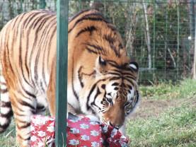 Atmosferă specială pentru necuvântătoare - Crăciunul animalelor la Zoo