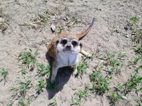 Mâine, 20 mai - Se redeschide Zoo Oradea