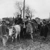 """""""100 de ani. Marşul spre Marea Unire (1916-1919)"""" - 6 decembrie 1916. Pierderea Capitalei"""