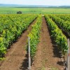 MADR: Promovarea vinurilor în ţări terţe - Un nou ajutor de minimis