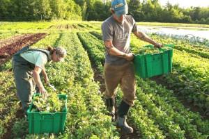 MADR. Ajutoare pentru fermieri - Lista completă a cuantumurilor