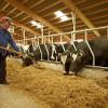 ANSVSA: în perioadele caniculare - Măsuri obligatorii pentru crescătorii de animale